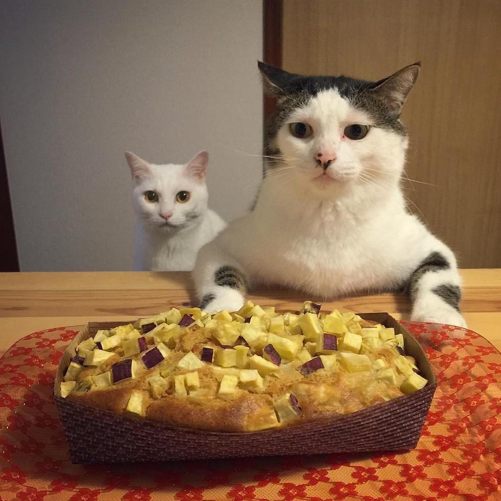 casal-fotogra-fa-gatos-ver-a-comer-naomiuno-5