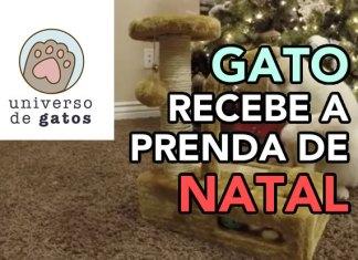 Gato recebe o presente de Natal adiantado [FOFURA]