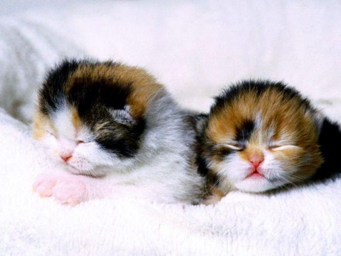 Gatinhos recém nascidos - Cuidados pós-parto