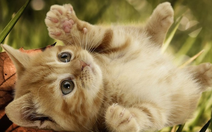 Corrija as situações que causaram mau comportamento do seu gato