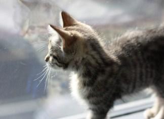 5 riscos que deveremos evitar no nosso gato
