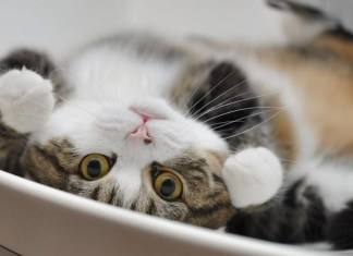 Socorro! o meu gato acorda á noite