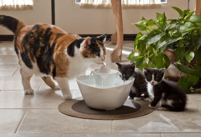 quanta agua deve beber um gato