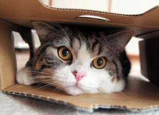 5 Dicas Rapidas para tornar o seu gato famoso na Internet