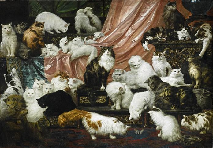 Gatos Persas 10 Factos que desconhece