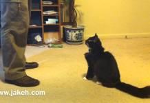 Kitty e os seus 30 truques apenas ao som de um Clicker!