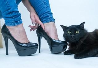 Pet Model Brasil faz galeria de fotos para homenagear trabalho de ONG e retratar preconceito contra gatos pretos.
