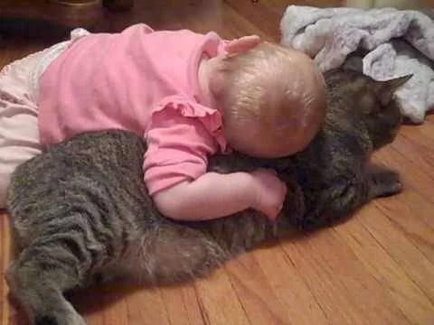 gatto paziente