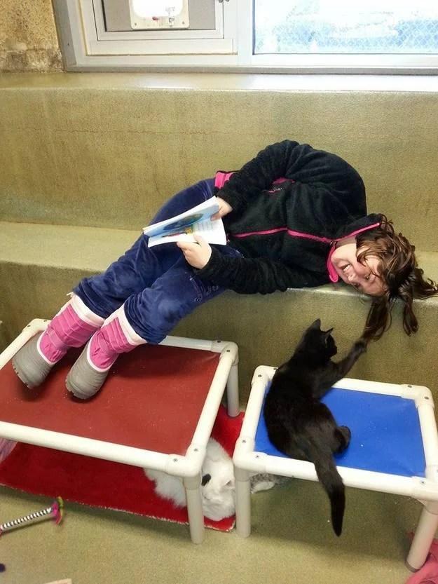 Un gatto gioca con i capelli di una bambina