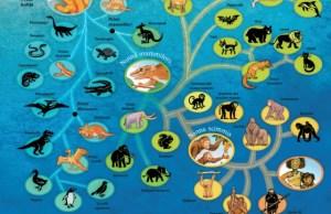 spiegare l'evoluzione ai bambini 1