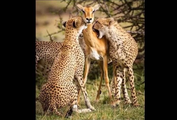 Mamma cervo