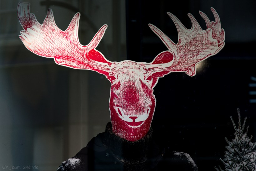 6 décembre : Animal