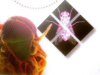 Dio creò la mosca di Martin Brookes Recensione UnLibro