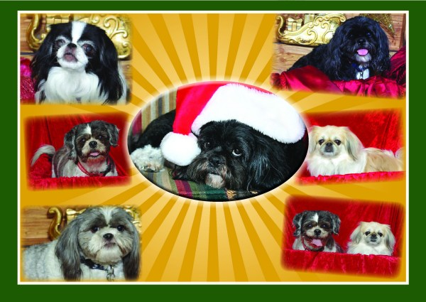 Happy Holidays from the Hanney's and The Pups!