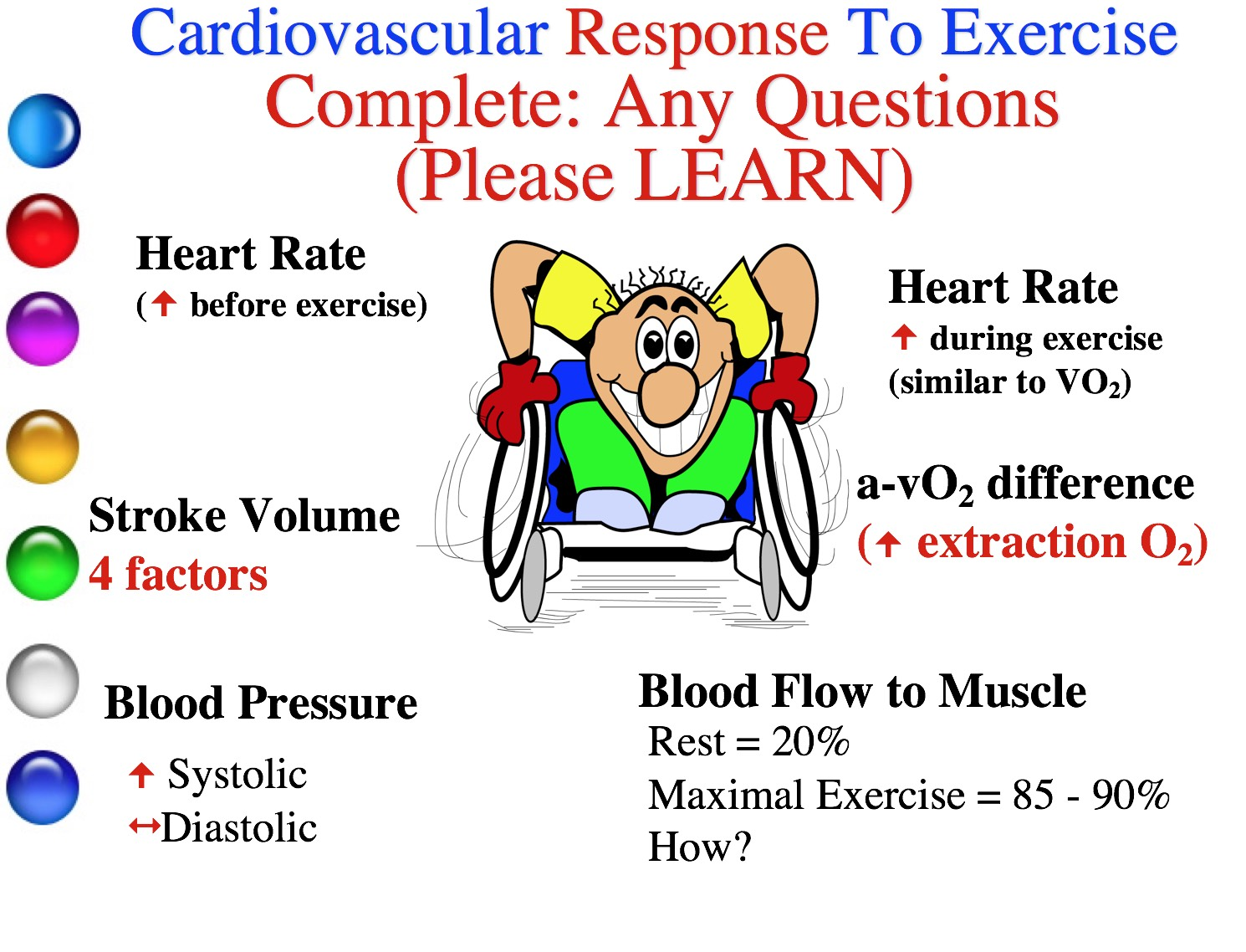 Cardiovascular Responses And Adaptations