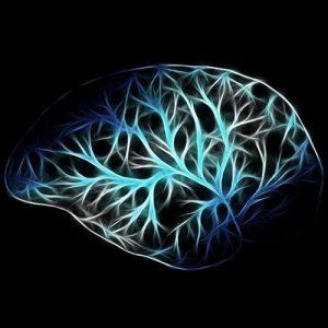cervello e cervello rettile
