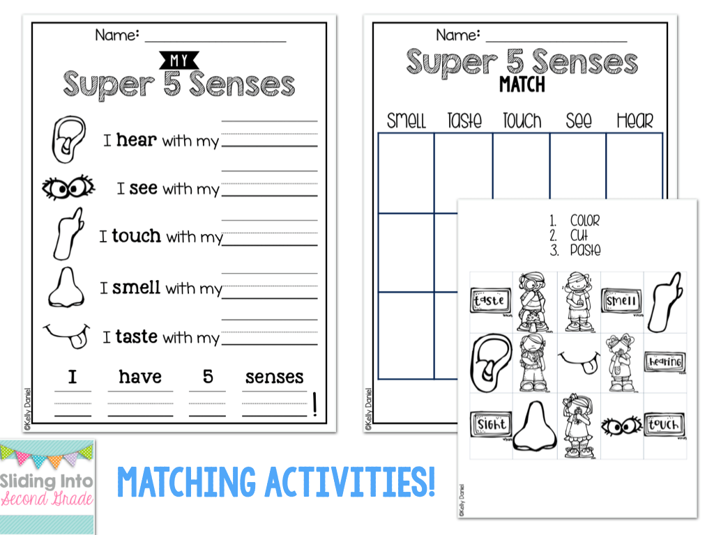 Senses Worksheets For Grade 2