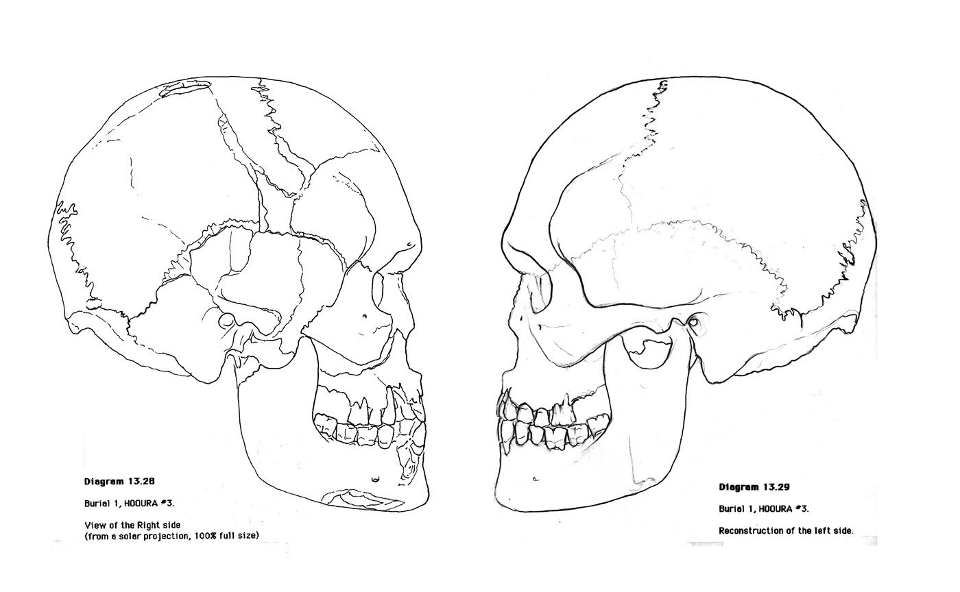 Skull Diagram Worksheets