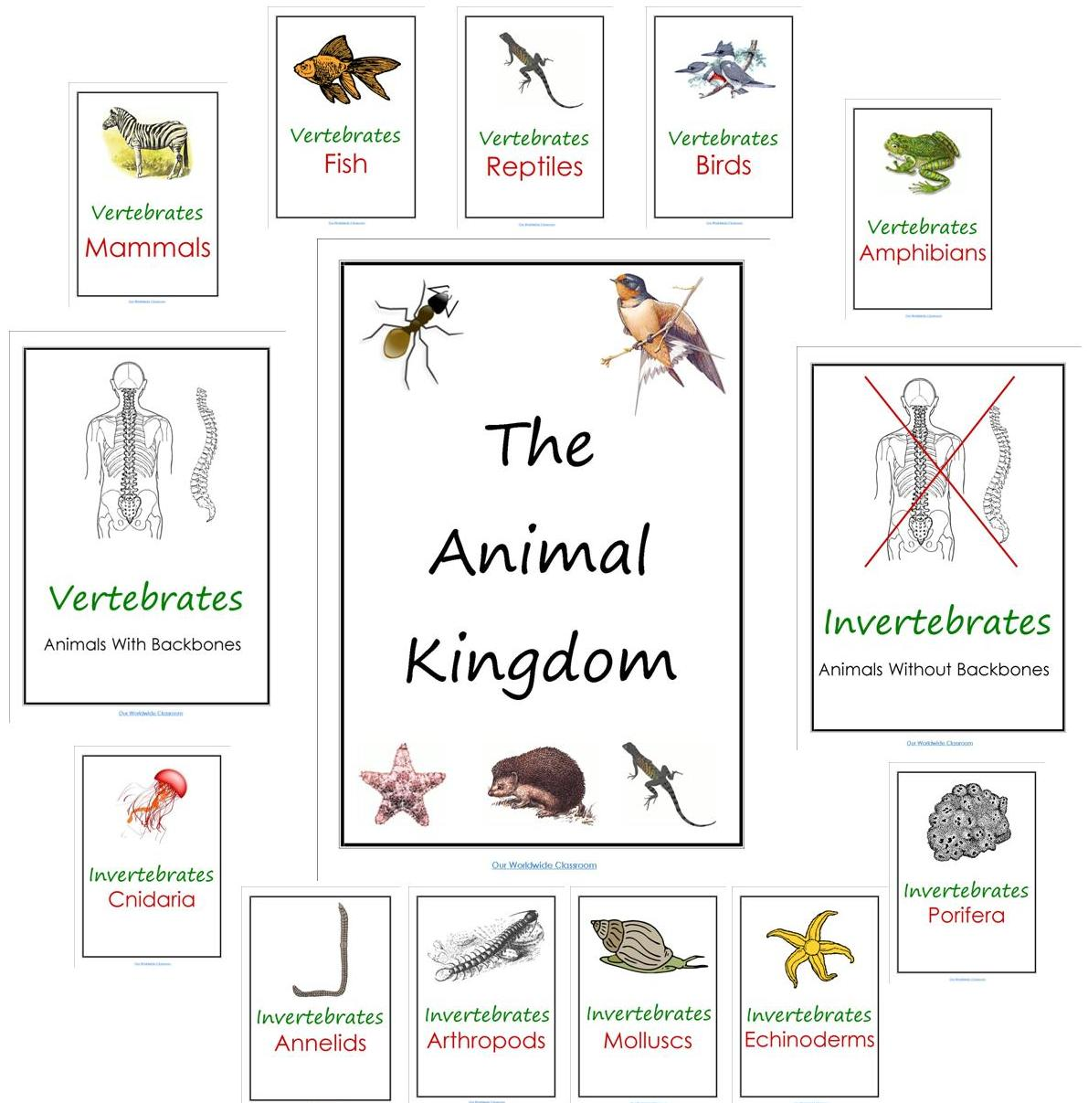 Animals Classification Worksheets