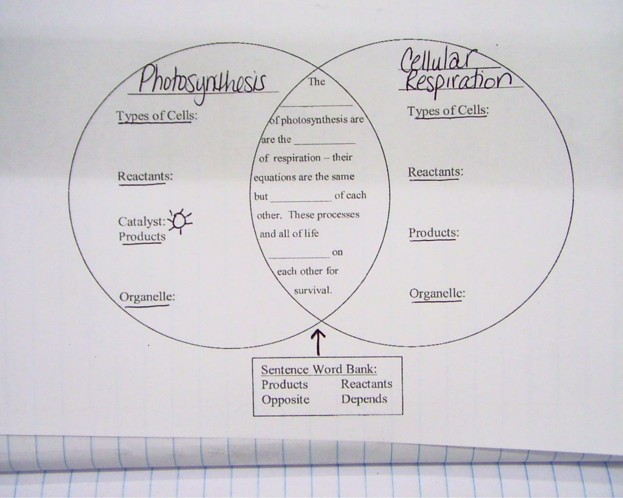 Respiratory Diagram Worksheets
