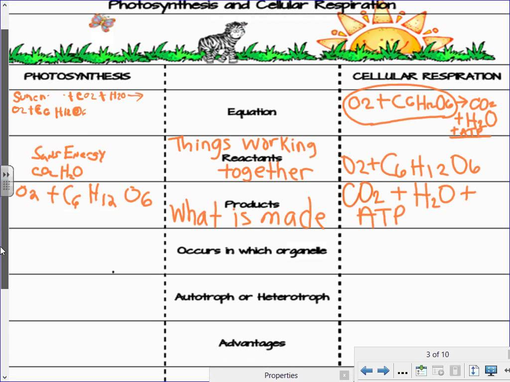 Photosynthesis And Cellular Respiration Worksheets Answer Key