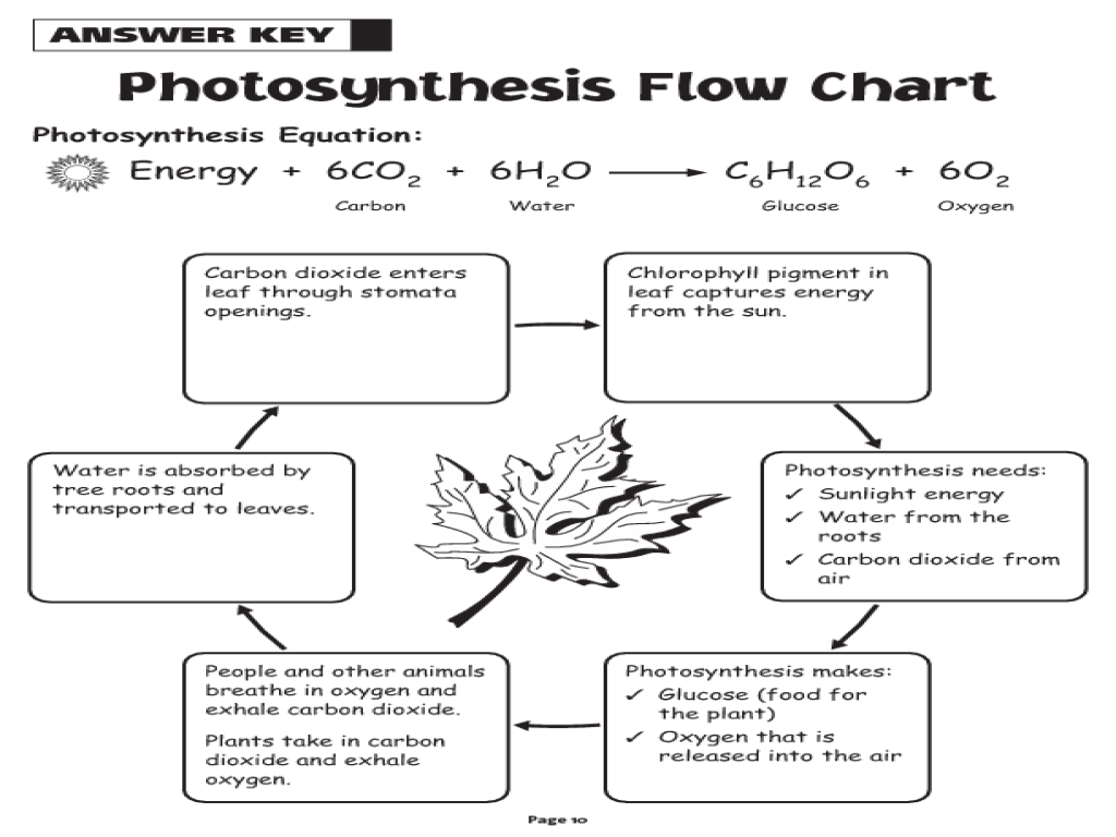 Photosynthesis Worksheets
