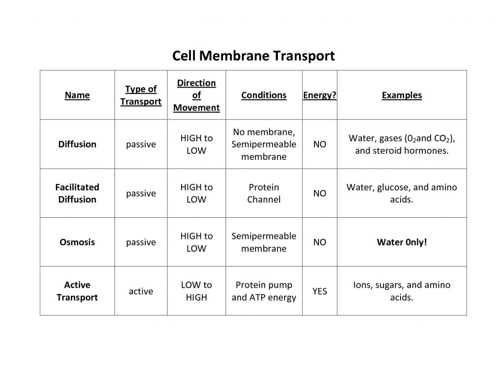 Cell Membrane Worksheet Answers Osmosis Is What Type Of