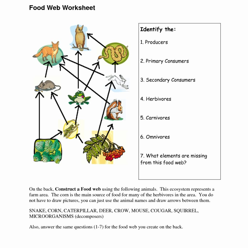 Food Web Worksheets Answer Key