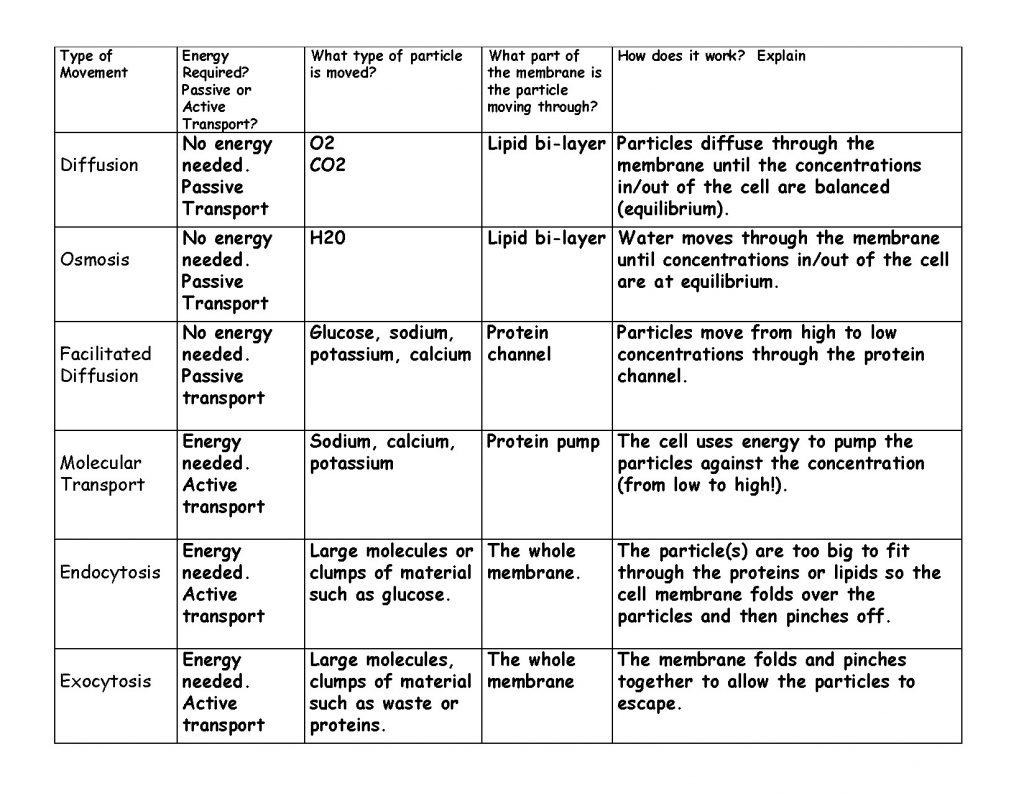 What Makes Cell Membranes Passive Transport Practice Worksheet Worksheets Samples