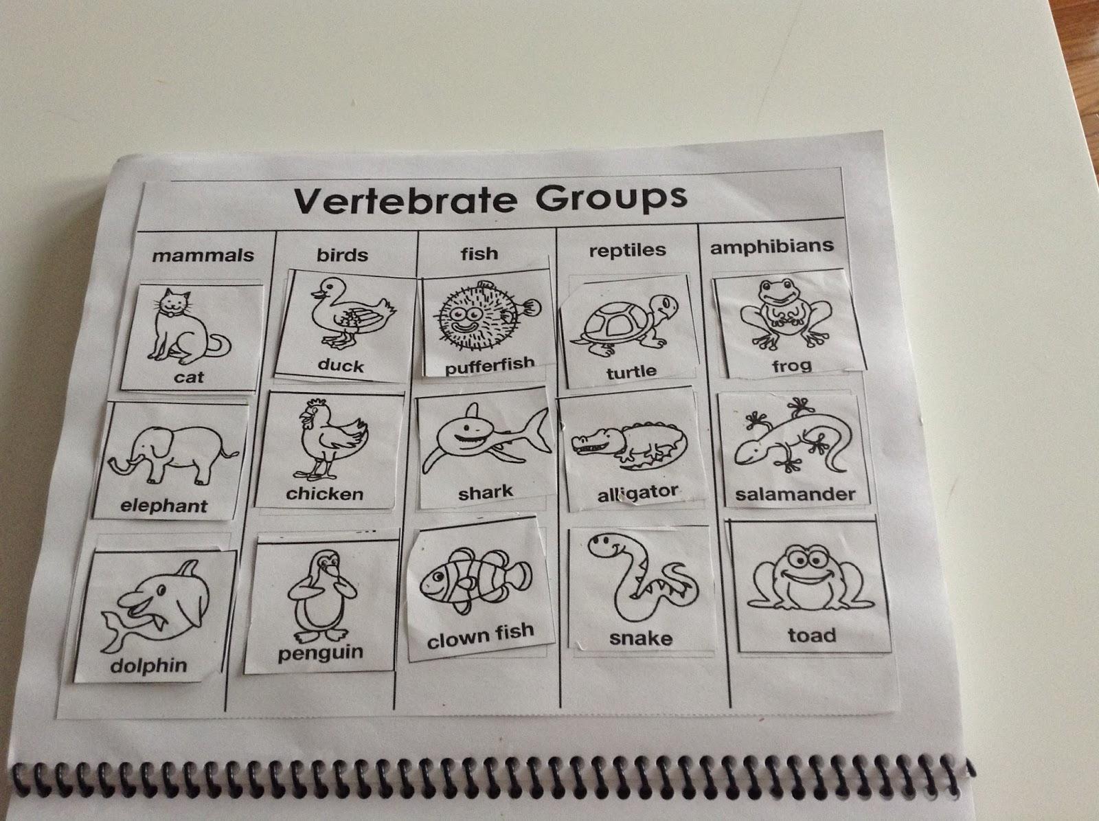 Invertebrate Vs Vertebrate Worksheets