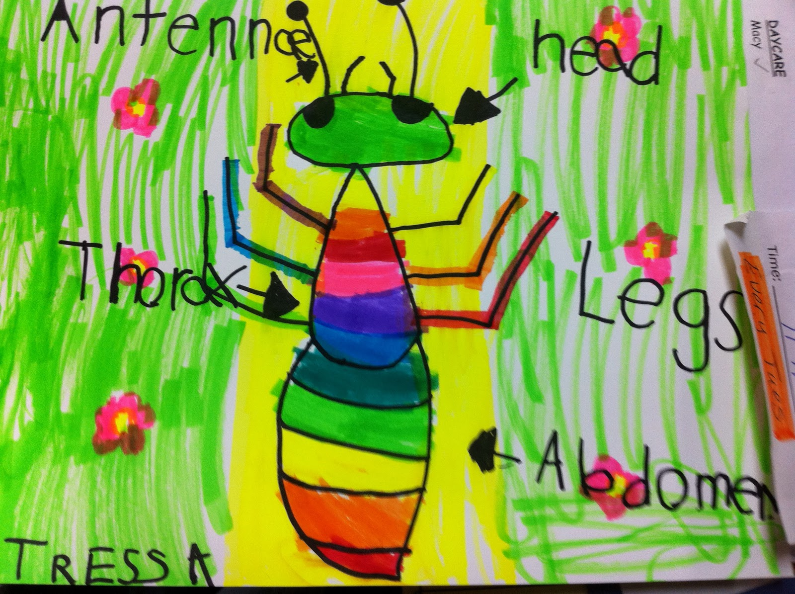 Label An Insect Body Parts Worksheets