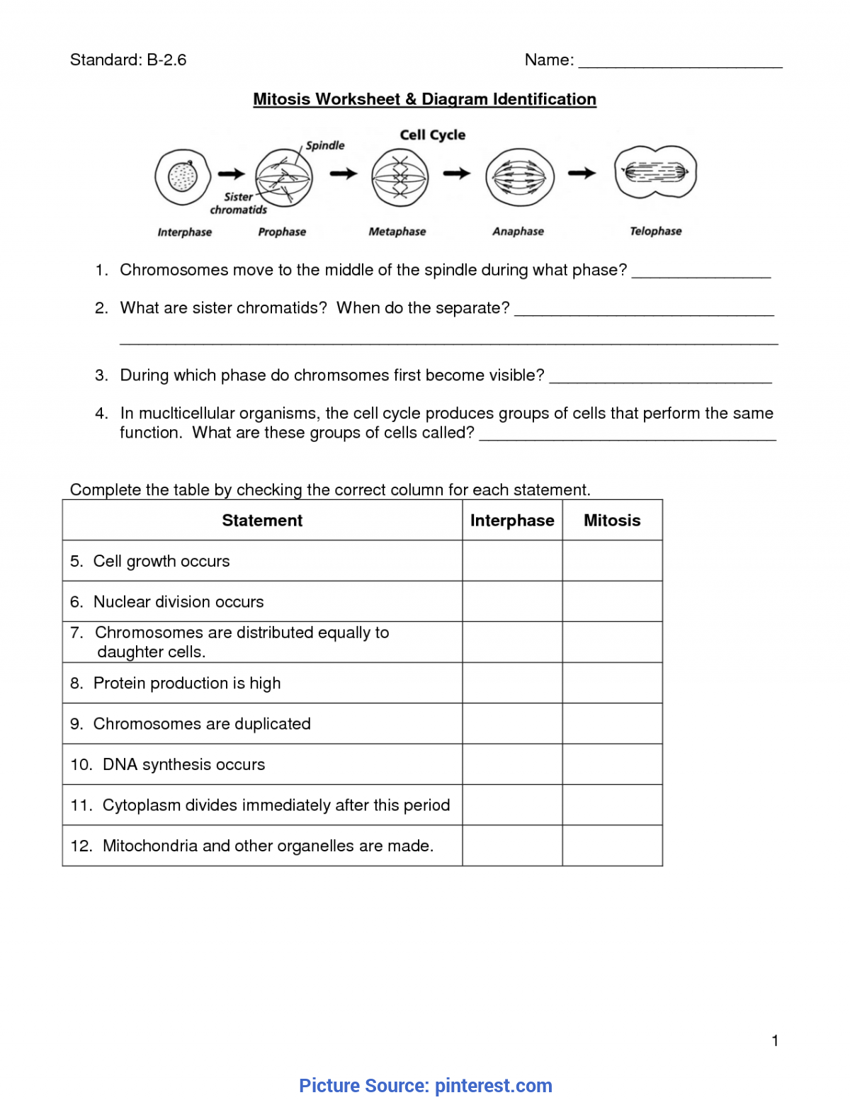 Mitosis Worksheets For Middle School