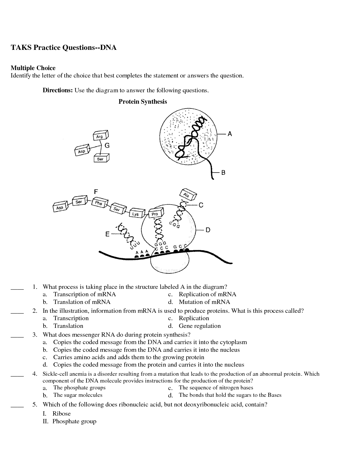 Protein Synthesis Practice Worksheets