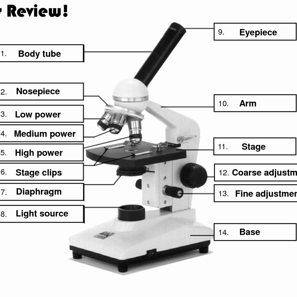 Parts Of A Microscope Worksheets Answers