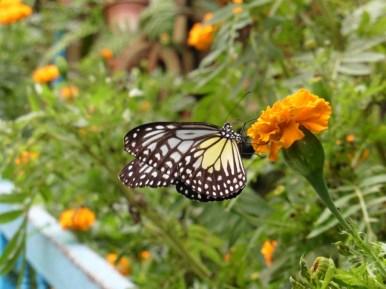 Criadero de mariposas