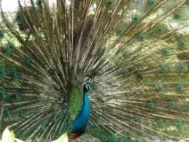 Bird Park KL