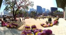 Festival del Crisantemo en el templo Jogyesa