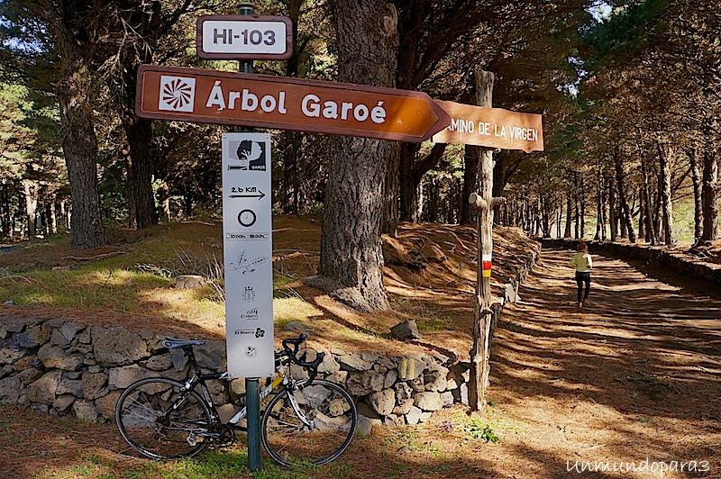 Resultado de imagen de ARBOL GAROE EL HIERRO