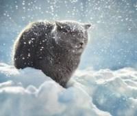 Мокрый снег и дождь: синоптики дали прогноз погоды на завтра
