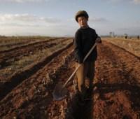 Северная Корея страдает от сильнейшей засухи за несколько десятилетий