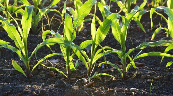 Urban & Small Farm Soil Health 101