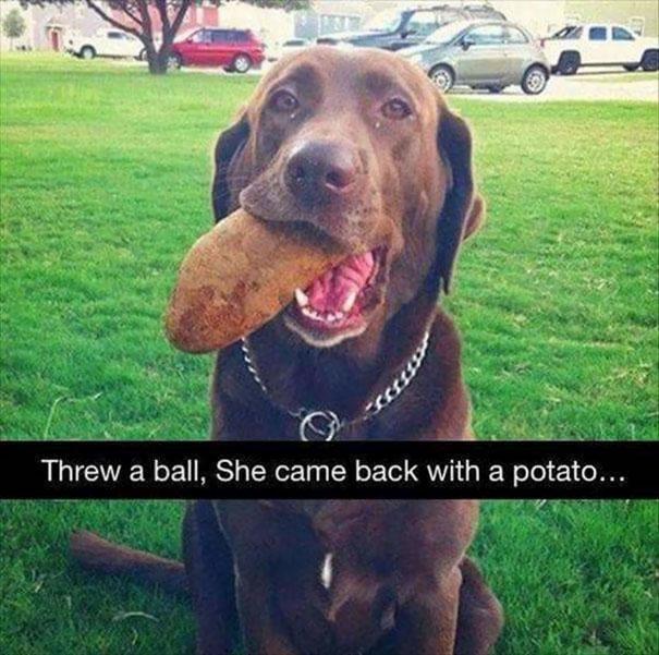 funny-idiot-dogs-102-5af2e00cbd177__605