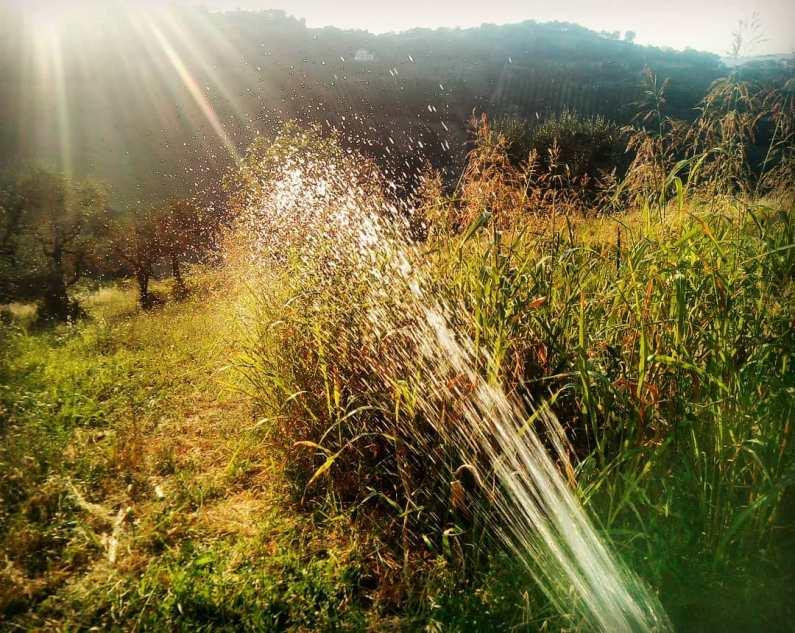 Irrigazione controluce