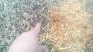 compost e pacciamatura da ramaglie
