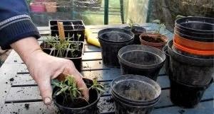 rinvaso piantine da semenzaio