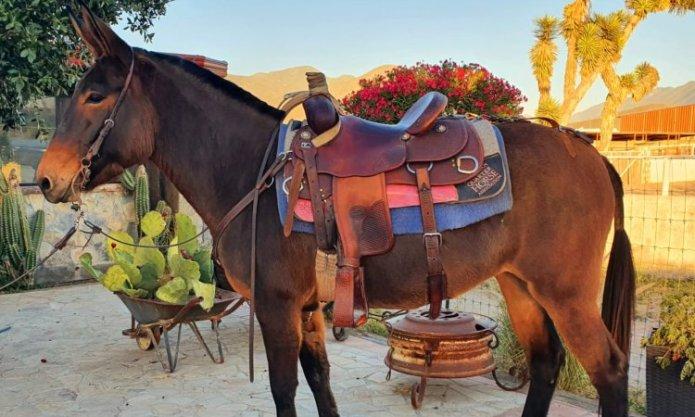 New species of Mixtec donkey