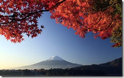 Mt. Fuji and autumn-colored maple tree