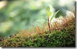 Sapling and moss