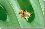 Frog - unpocogeek.com