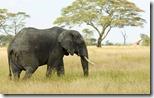 Elephant - unpocogeek.com